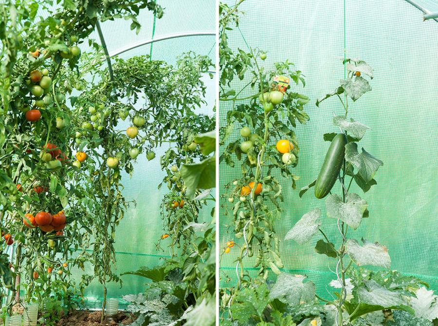 2x3m x3,5m 2,5x4 Gewächshaus Foliengewächshaus Folienzelt Tomatenhaus PREMIUM